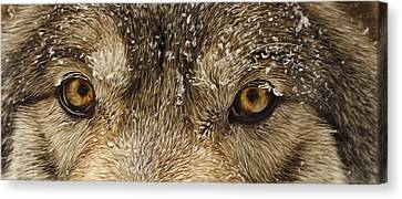Canvas Print featuring the photograph The Eyes Of The Wolf  by Brian Cross