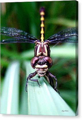 Canvas Print featuring the photograph The Face Of A Dragonfly 01 by George Bostian