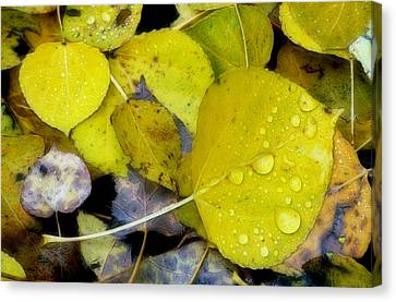 The Face Of Fall Canvas Print by Bill Morgenstern