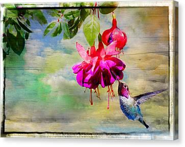 The Face Of Fuchsia Canvas Print by Lynn Bauer