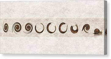 The Failed Evolutionary Spin Cycles Of The Snail Canvas Print
