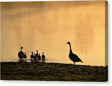 The Family Canvas Print by Bill Cannon