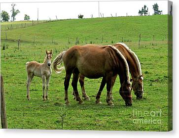 The Family Of Three. Canvas Print by Penny Neimiller