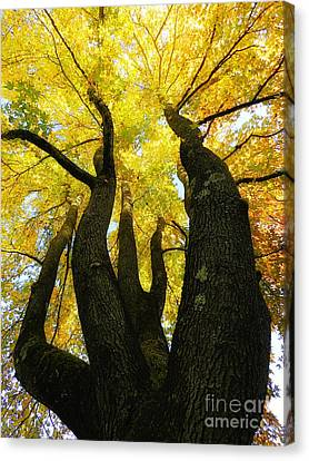 The Family Tree Canvas Print
