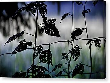 The Fence Line Canvas Print by Gary Neiss