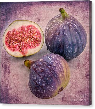 Hannes Cmarits Canvas Print - the fig II  by Hannes Cmarits