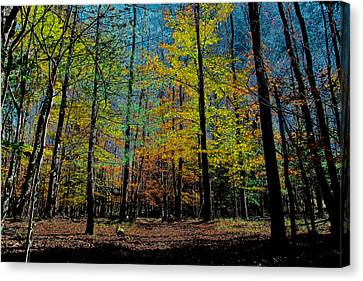 The Final Days Of Fall Canvas Print by David Patterson