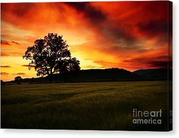Rural Landscapes Canvas Print - the Fire on the Sky by Angel  Tarantella