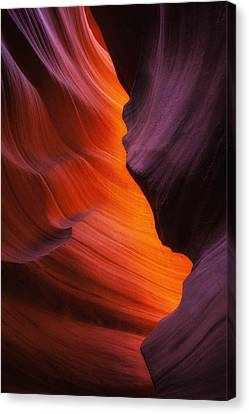 The Fire Within Canvas Print by Darren  White