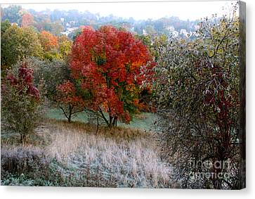 Canvas Print featuring the photograph The First Frost by Jay Nodianos