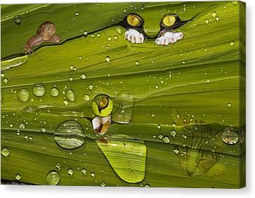 The First Rain Canvas Print by Angela A Stanton
