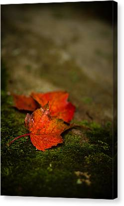The First Whispers Of Fall Canvas Print by Shane Holsclaw