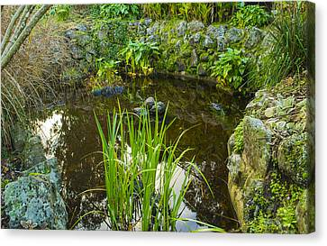 Canvas Print featuring the photograph The Fish Pond  by Naomi Burgess