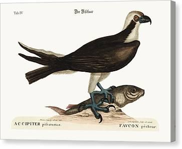 The Fishing Hawk Canvas Print by Splendid Art Prints