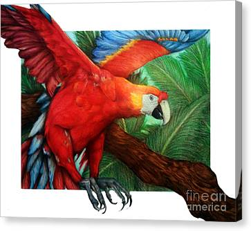 Macaw Canvas Print - The Flight Of The Macaw by Derrick Rathgeber