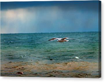 The Flight Canvas Print by Rhonda Humphreys