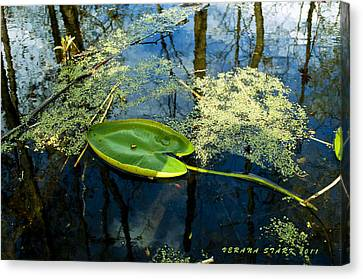 Canvas Print featuring the photograph The Floating Leaf Of A Water Lily by Verana Stark