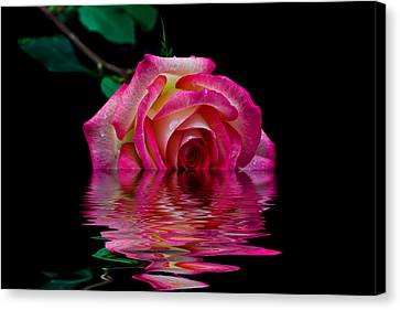 The Floating Rose Canvas Print by Doug Long
