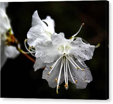 The Flower Canvas Print by Tim Buisman