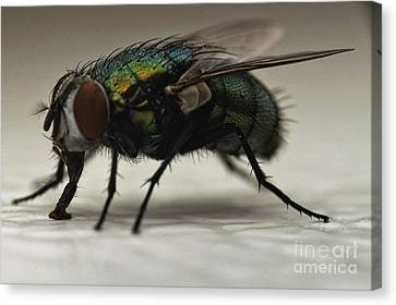 D700 Canvas Print - The Fly Macro by Michael Ver Sprill