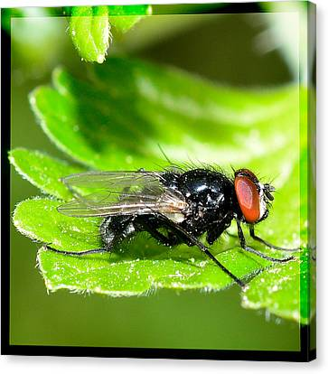 The Fly Canvas Print by Tommytechno Sweden