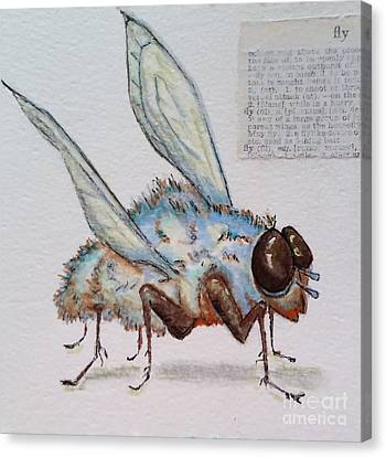 Canvas Print featuring the drawing The Fly by Vickie Scarlett-Fisher
