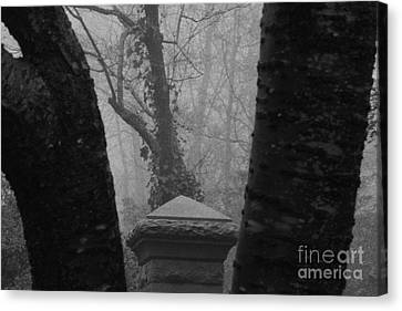 Canvas Print featuring the photograph The Fog by Steven Macanka