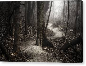 Wet Leaves Canvas Print - The Foggy Path by Scott Norris
