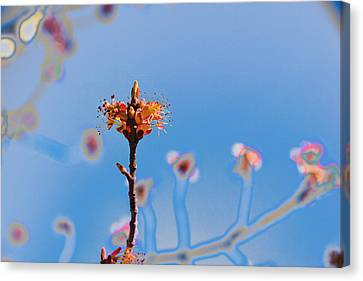 The Following Canvas Print by Kathy Bassett