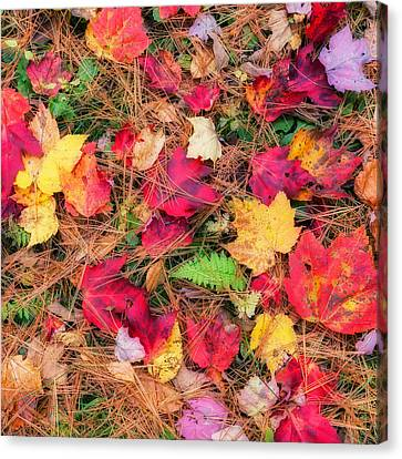 The Forest Floor Canvas Print by Bill Wakeley