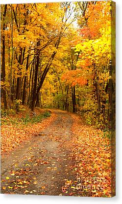 Canvas Print featuring the photograph The Forest Road by Jim McCain