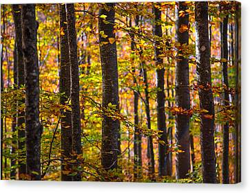 The Forest Canvas Print by Stefano Termanini
