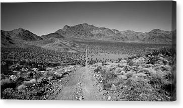 The Forever Road Canvas Print by Peter Tellone