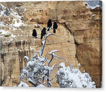 The Four Crows Canvas Print by Laurel Powell