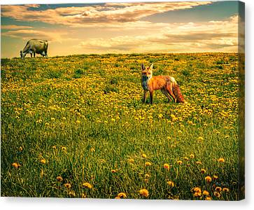 The Fox And The Cow Canvas Print by Bob Orsillo