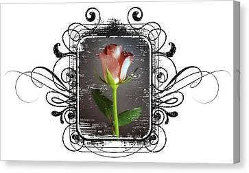 The Framed Rose Canvas Print by Mauro Celotti