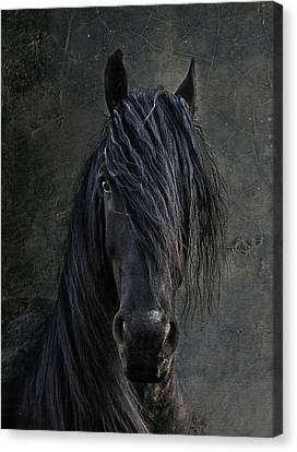The Frisian Canvas Print by Joachim G Pinkawa