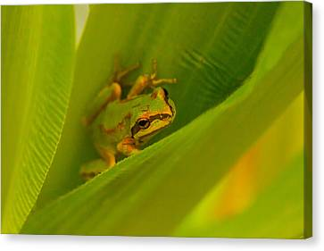 Canvas Print featuring the photograph The Frog by Dennis Bucklin