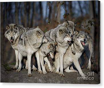 Canvas Print featuring the photograph The Gang by Wolves Only