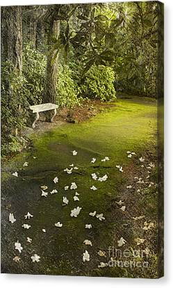 The Garden Bench Canvas Print by Carrie Cranwill