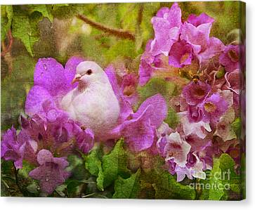 The Garden Of White Dove Canvas Print by Olga Hamilton