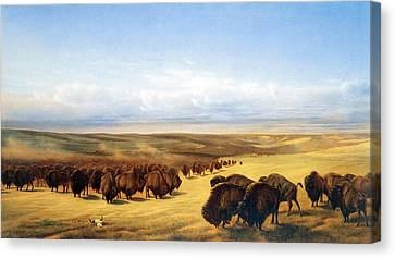 Bison Heard Canvas Print - The Gathering Of The Herds by William Jacob Hays