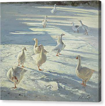Flock Of Geese Canvas Print - The Gathering  by Timothy Easton