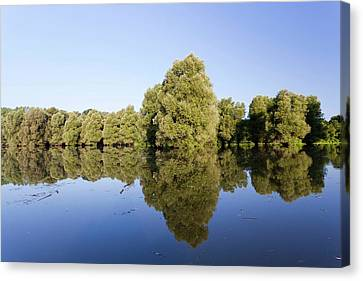 Willow Lake Canvas Print - The Gemenc Forest In The Danube-drava by Martin Zwick