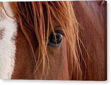 Canvas Print featuring the photograph The Gentle Eye  by Eric Rundle