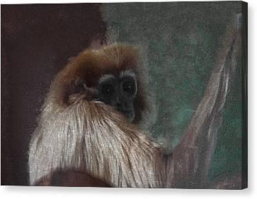 Ape Canvas Print - The Gibbon by Ernie Echols