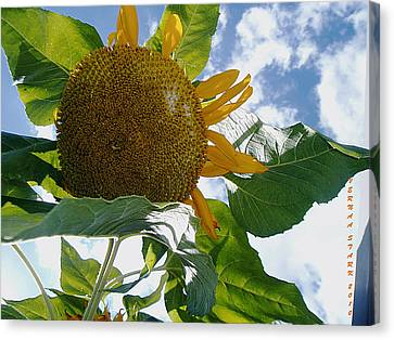 Canvas Print featuring the photograph The Gigantic Sunflower by Verana Stark