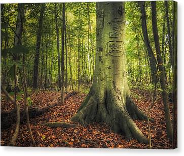 Rooted Canvas Print - The Giving Tree by Scott Norris