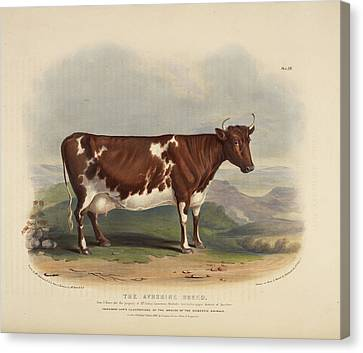 The Glamorgan Breed Canvas Print by British Library