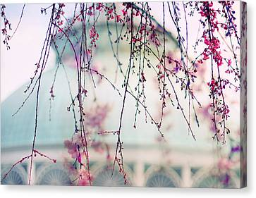Cherry Tree Canvas Print - The Glass House by Jessica Jenney